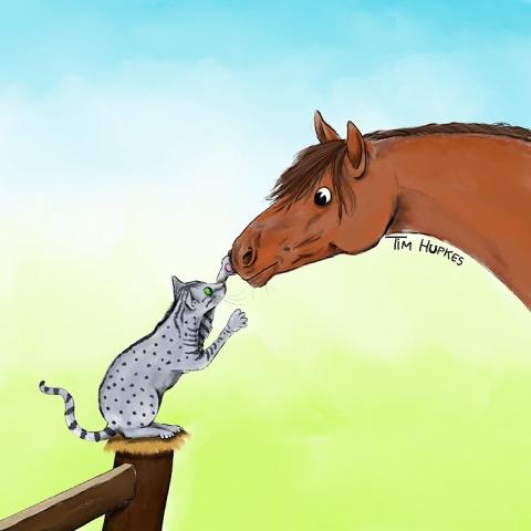 Cat and horse meet