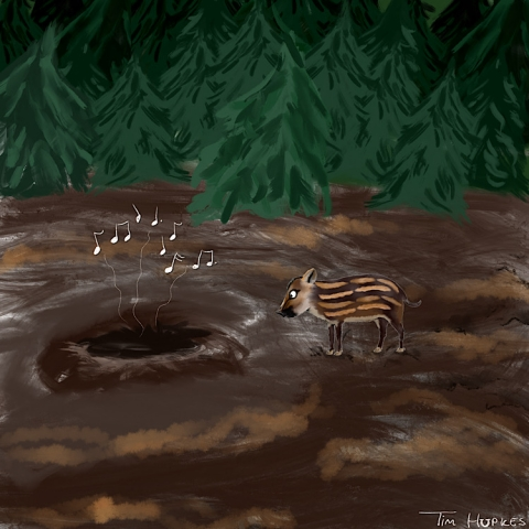 Piglet in the woods
